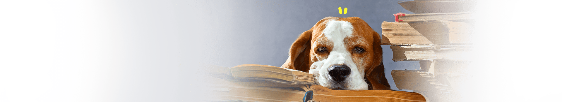 perro cachorrito aburrido en clases